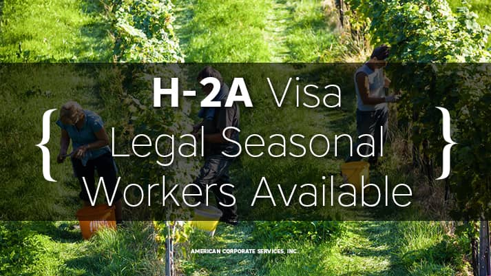 Legal Seasonal Workers Available with H-2A Visa
